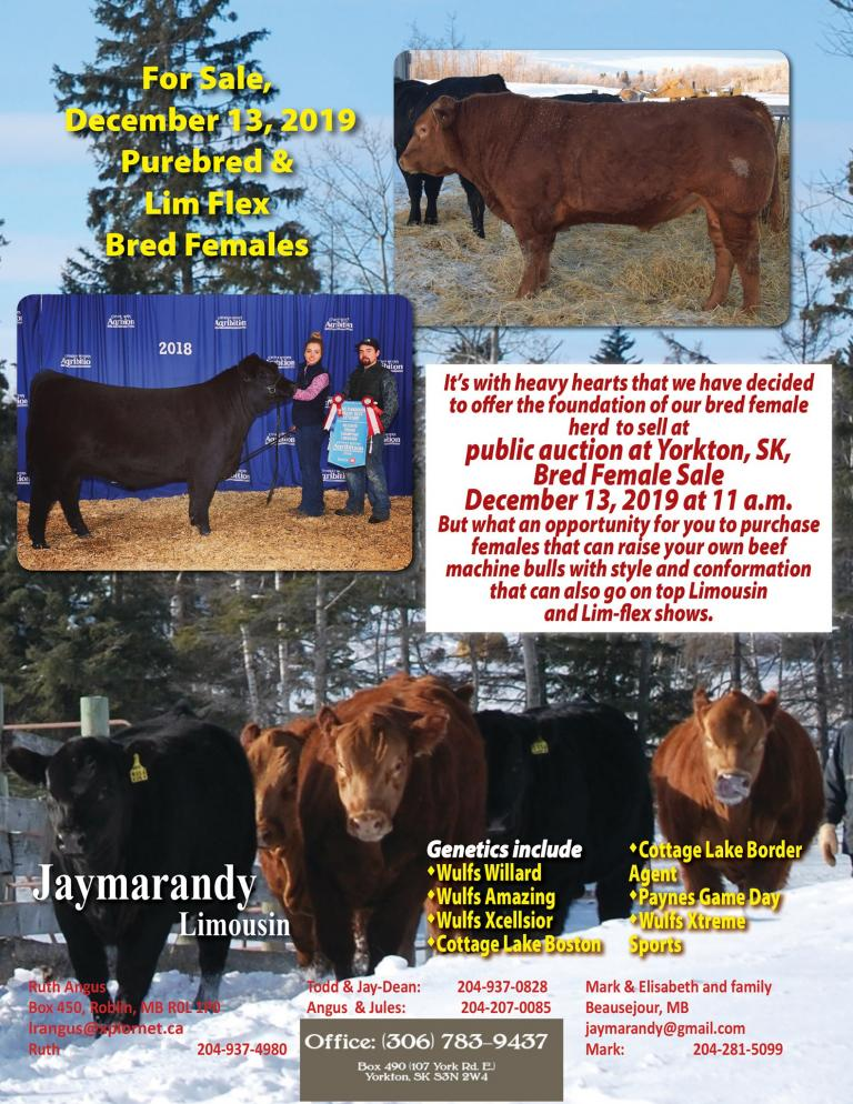 Jaymarandy Limousin Sale December 2019